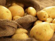 اختلاف ۲ برابری قیمت سیب زمینی