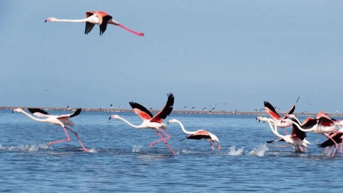 پرندگان مهاجر آبزی